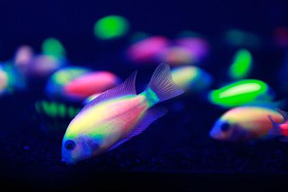 Житель Псковской области пожаловался на светящуюся рыбу