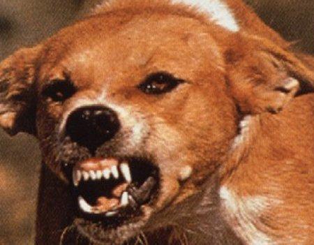 В Гомельской области выявили более 100 животных, больных бешенством